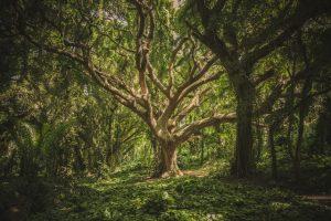 Puu metsässä